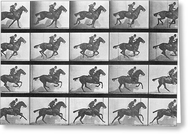 Equestrian Prints Photographs Greeting Cards - Galloping Horse Greeting Card by Eadweard Muybridge