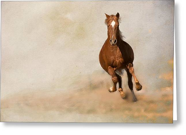 Hores Greeting Cards - Galloping Horse Greeting Card by Peggy Blackwell