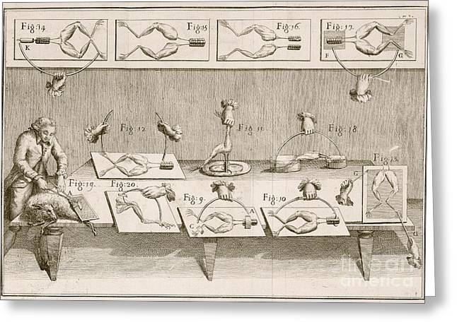 Electric Sheep Greeting Cards - Galvanis Electricity Experiments, 1780s Greeting Card by British Library