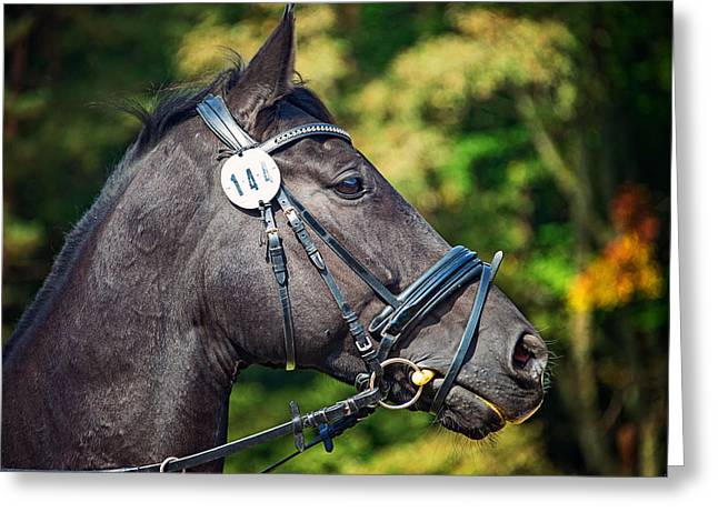 Dressage Photographs Greeting Cards - Game Face Greeting Card by Ryan Wyckoff