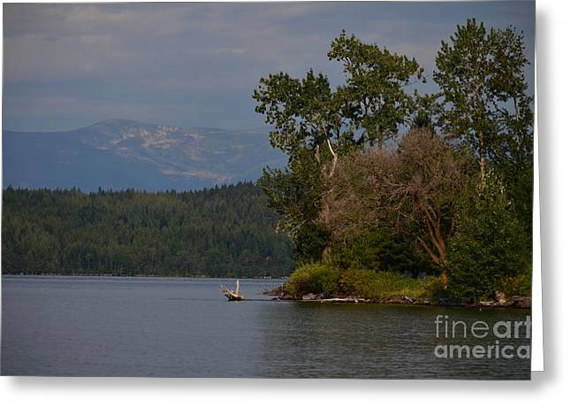 Schweitzer Greeting Cards - Gang of Green Greeting Card by Greg Patzer