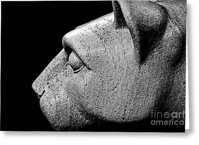 Animal Sculptures Greeting Cards - Garattis Lion Greeting Card by Tom Gari Gallery-Three-Photography