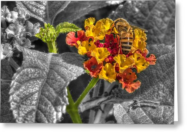 Hdr Landscape Greeting Cards - Garden Bee  at Woodward Park 3f Greeting Card by John Straton