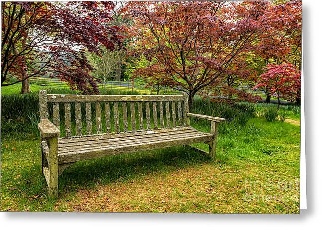 Bluebells Greeting Cards - Garden Bench Greeting Card by Adrian Evans