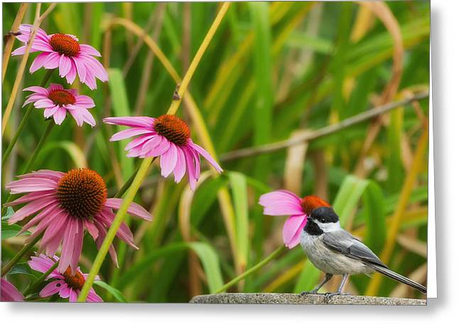 Birds With Flowers Greeting Cards - Garden Birds Chickadee Greeting Card by Bill  Wakeley