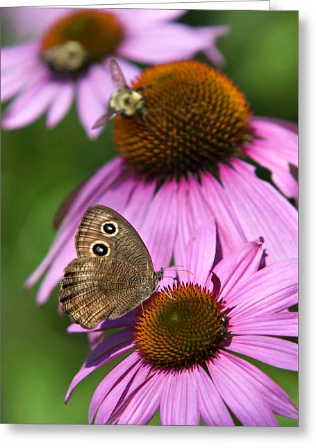 Garden Butterfly Greeting Card by Christina Rollo
