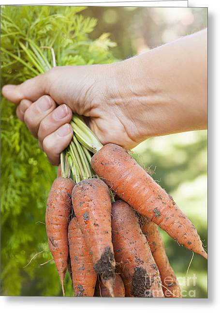 Produce Greeting Cards - Garden carrots Greeting Card by Elena Elisseeva