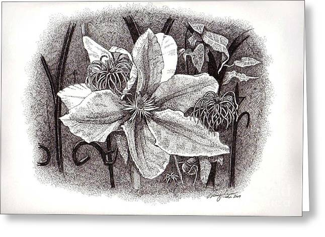 Trellis Drawings Greeting Cards - Garden Clematis Greeting Card by Tanya Crum