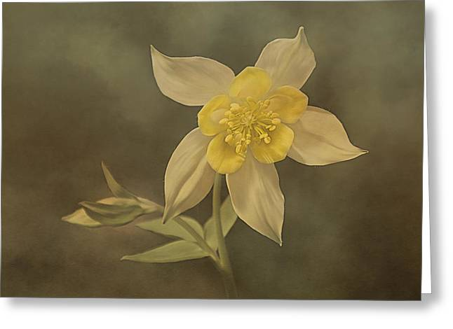 Short-lived Perennial Greeting Cards - Garden Columbine Greeting Card by Linda Muir