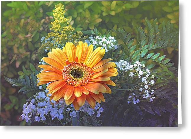 Soft Light Greeting Cards - Garden Daisy Delight Greeting Card by Bill Tiepelman