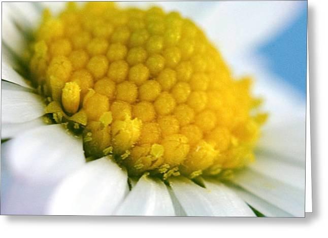 Garden Daisy Greeting Card by Natalie Kinnear
