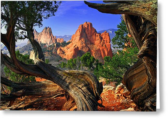 Garden Of The Gods Greeting Cards - Garden framed by twisted Juniper Trees Greeting Card by John Hoffman