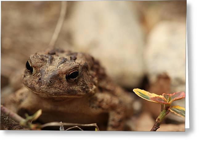 Garden Frog Greeting Card by Karol Livote