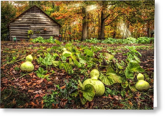 Rural Schools Greeting Cards - Garden Gourds Greeting Card by Debra and Dave Vanderlaan