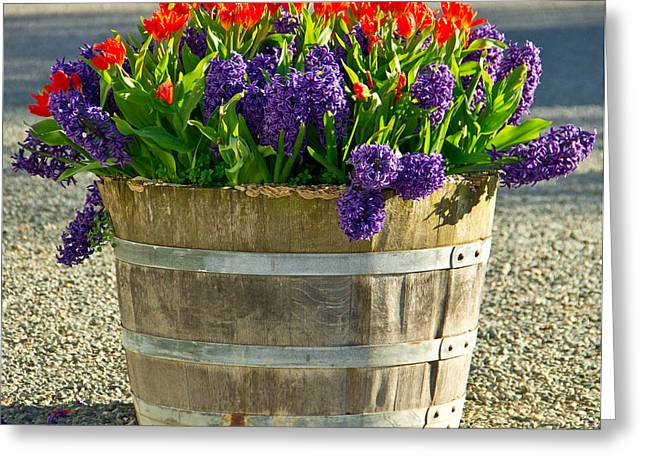 Senetti Photographs Greeting Cards - Garden in a bucket Greeting Card by Eti Reid