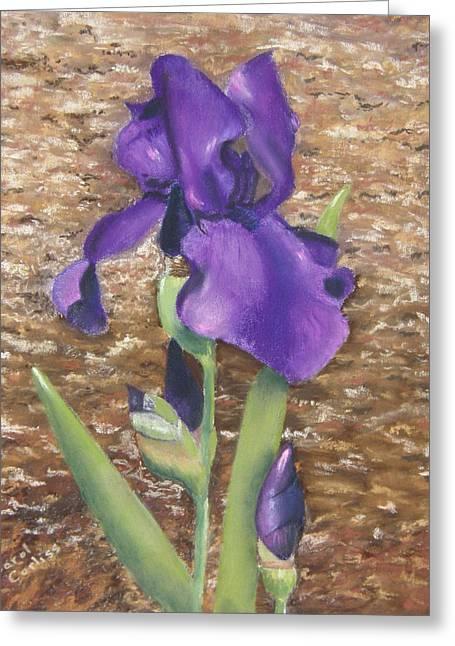 Iris Pastels Greeting Cards - Garden Iris Greeting Card by Carol Corliss