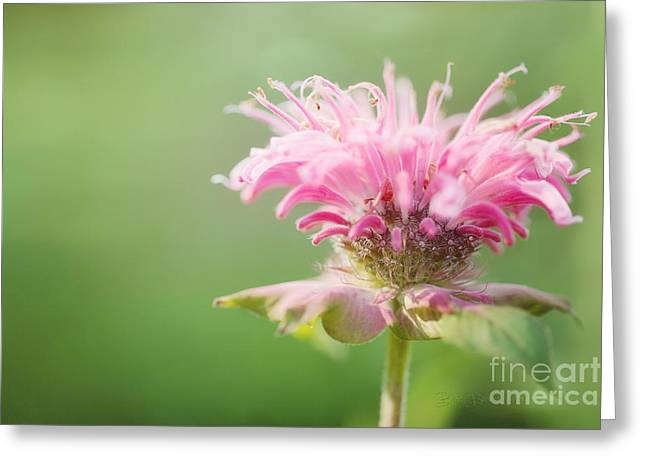 Bloosom Greeting Cards - Garden Jester Greeting Card by Reflective Moment Photography And Digital Art Images