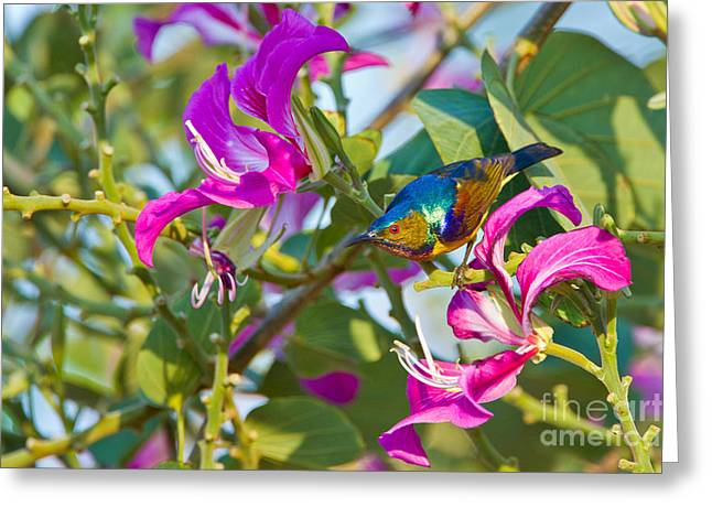 Sunbird Greeting Cards - Garden Jewels Greeting Card by Ashley Vincent
