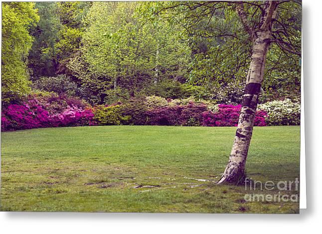 Garden Scene Digital Greeting Cards - Garden Landscape Greeting Card by Svetlana Sewell