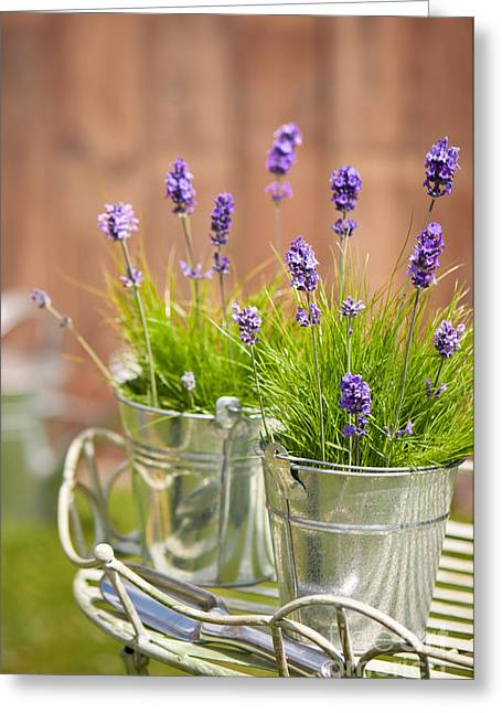 Galvanize Photographs Greeting Cards - Garden Lavender Greeting Card by Amanda And Christopher Elwell