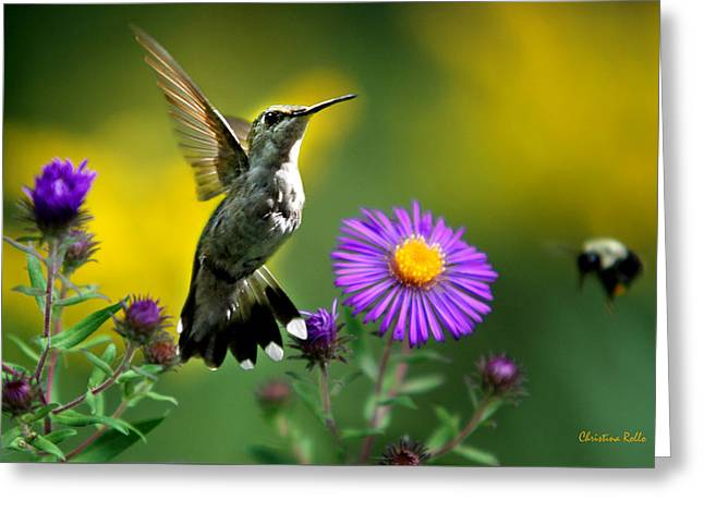 Archilochus Colubris Greeting Cards - Garden Lights Greeting Card by Christina Rollo