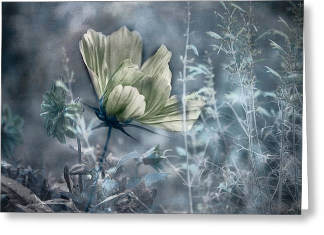 Photo Montage Greeting Cards - Garden Montage Greeting Card by Bonnie Bruno