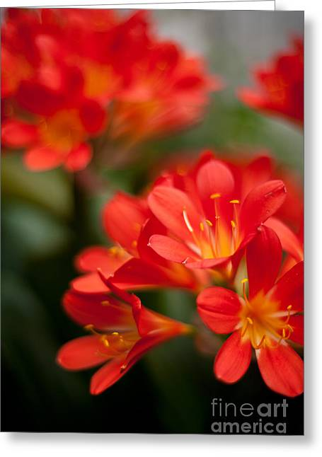 Garden Of Bliss Greeting Card by Mike Reid
