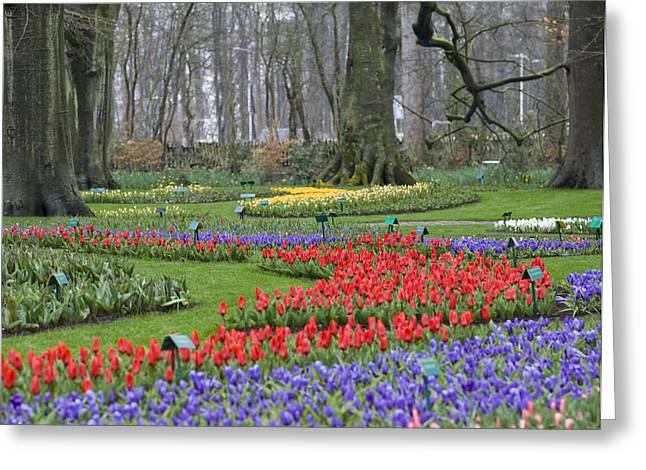 Keukenhof Gardens Greeting Cards - Garden of Eden Greeting Card by Juli Scalzi