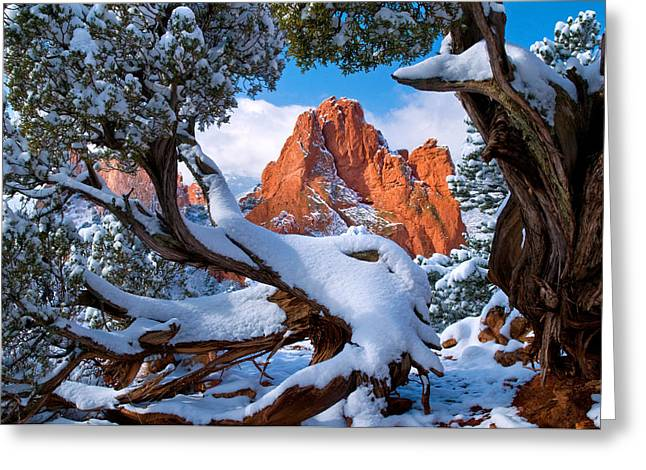High Up Greeting Cards - Garden of the Gods framed by Juniper trees Greeting Card by John Hoffman