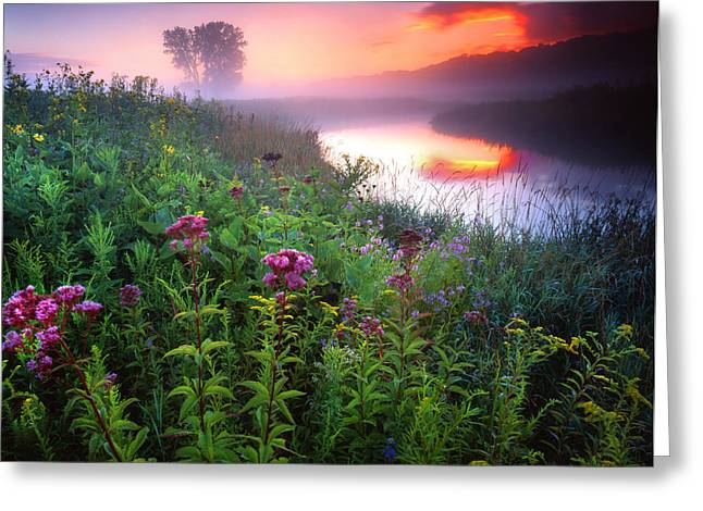 Hack-ma-tack National Wildlife Refuge Greeting Cards - Garden on the Creek Greeting Card by Ray Mathis