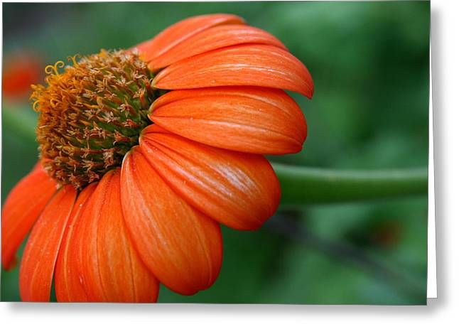 Wildflower Greeting Cards - Garden Passion  Greeting Card by Neal  Eslinger