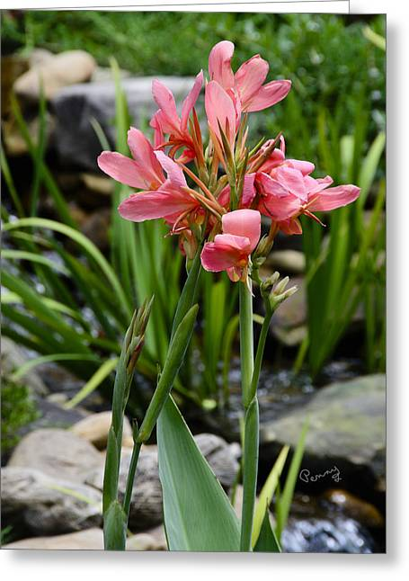 Canna Greeting Cards - Garden Pond Water Canna Greeting Card by Penny Lisowski