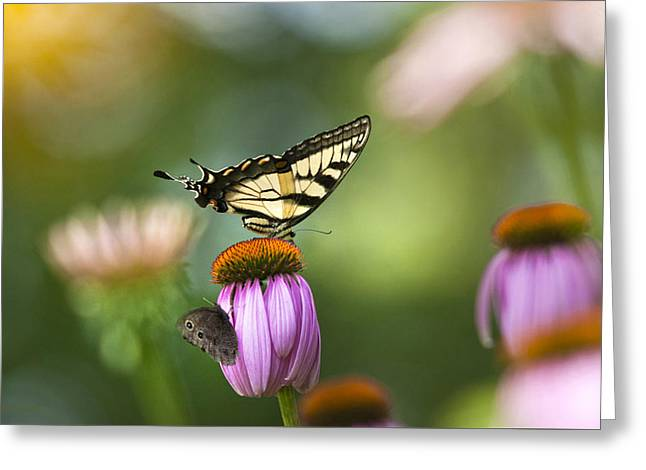 Butterfly On Flower Greeting Cards - Garden Rainbow Butterfly Greeting Card by Christina Rollo