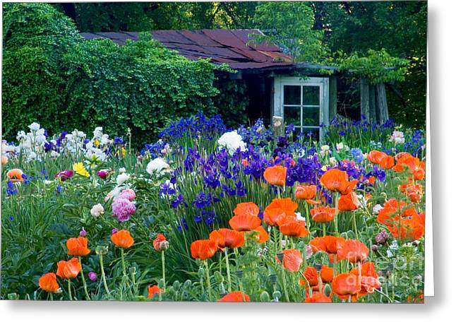 Garden Shed Greeting Card by Oscar Gutierrez