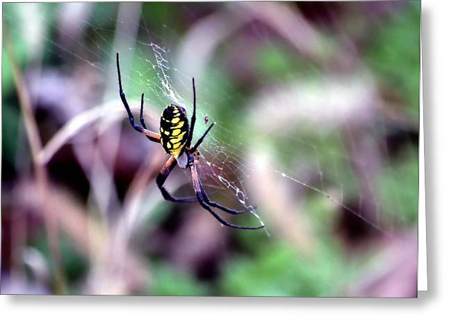 Coloured Greeting Cards - Garden Spider Greeting Card by Deena Stoddard