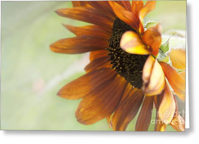Inflorescence Greeting Cards - Garden Whispers Greeting Card by Sharon Mau