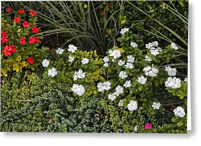 Grau Greeting Cards - Garden White Greeting Card by Linda Phelps