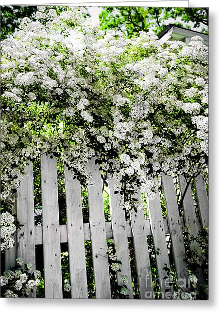 Spirea Greeting Cards - Garden with white fence Greeting Card by Elena Elisseeva