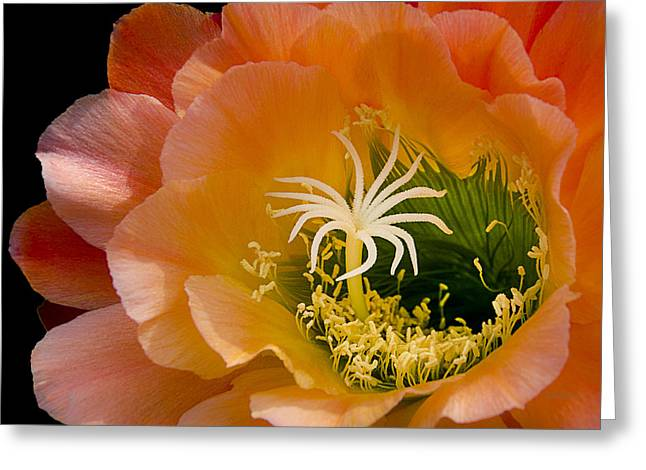 Apricot Greeting Cards - Garden Within Greeting Card by Julie Palencia