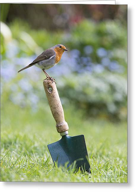 Garden Tools Greeting Cards - Gardeners Friend Greeting Card by Tim Gainey