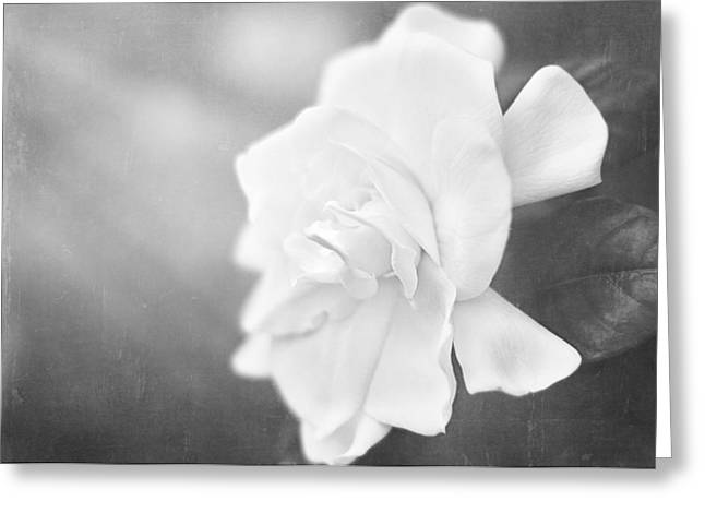 Gardenia Greeting Cards - Gardenia in the Sunlight Greeting Card by Jessie Gould