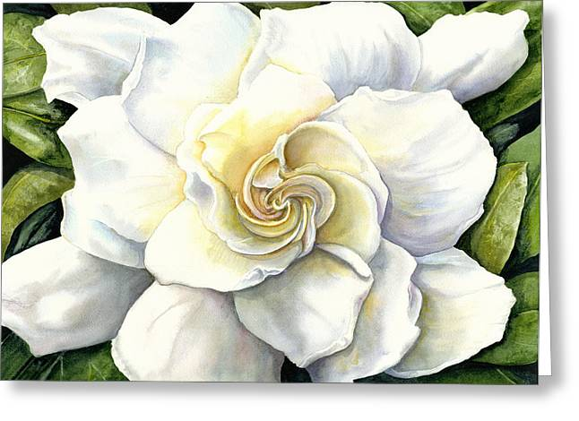 Gardenia Greeting Cards - Gardenia Greeting Card by Karen Wright