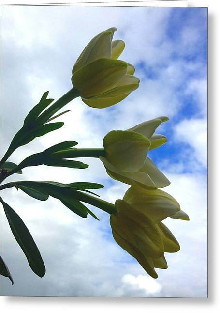 Blue Green Wave Greeting Cards - Gardenia Trio 6 Greeting Card by Ange Sylvestri