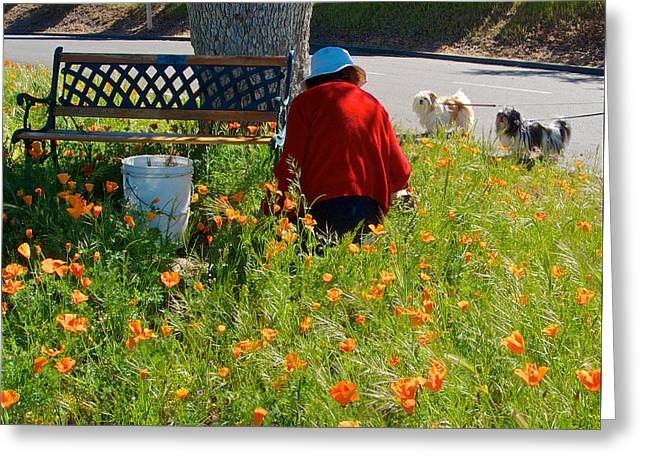 Gardening Distractions In Park Sierra-california Greeting Card by Ruth Hager