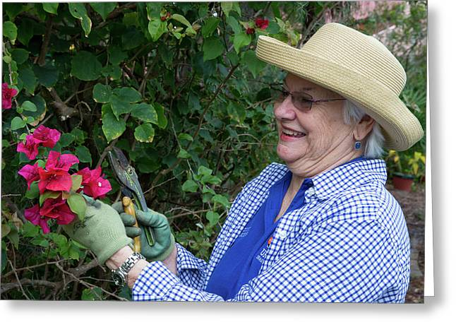 Gardening In Later Life Greeting Card by Alex Rotas