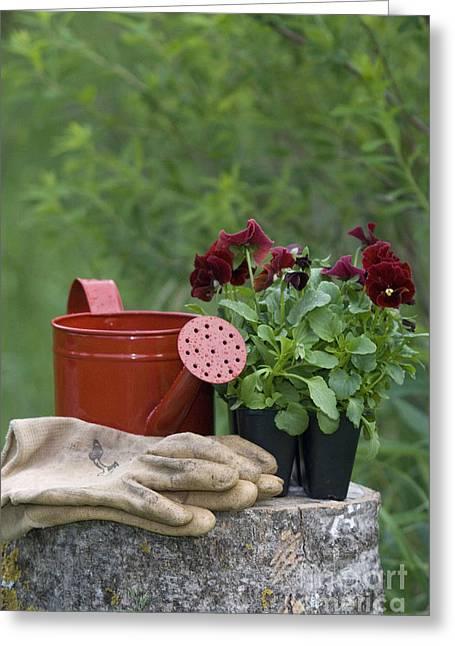 Yardwork Greeting Cards - Gardening Still Life Greeting Card by Linda Freshwaters Arndt
