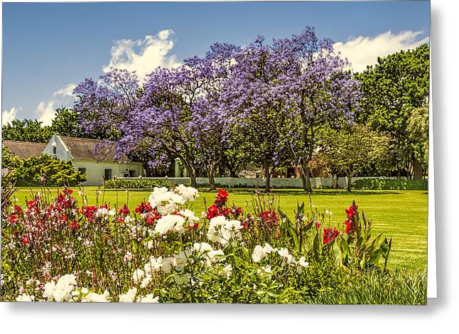 Stellenbosch Greeting Cards - In Bloom Greeting Card by Maria Coulson