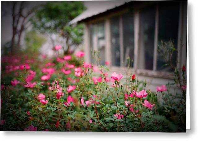 Medium Pink Greeting Cards - Gardens of Pink Greeting Card by Linda Unger