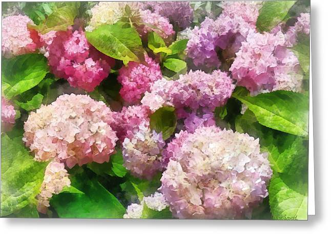 Hydrangeas Greeting Cards - Gardens - Pink and Lavender Hydrangea Greeting Card by Susan Savad