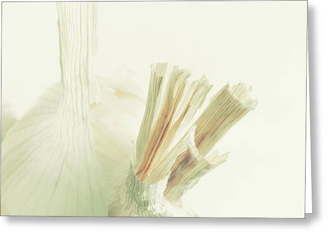 Harding Greeting Cards - Garlic Abstract Greeting Card by Constance Fein Harding